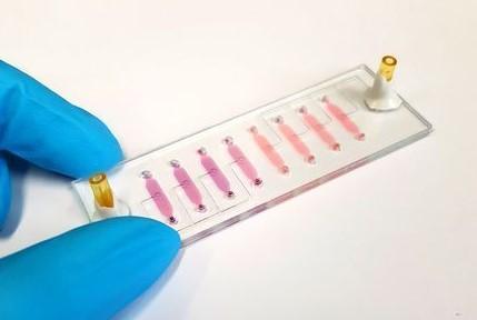 Ein Bio-Chip im Labor an der TU Wien (© TU Wien)